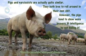 Narcissists and pigs